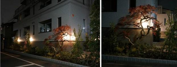 道路際の植栽 夜景