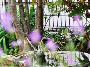 お庭の水瓶