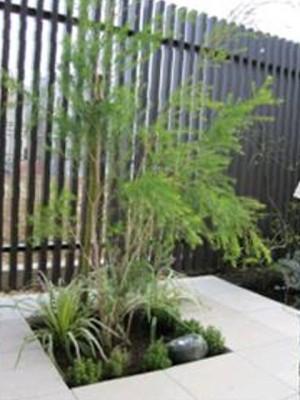 植栽を照らすソーラーライト