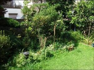 東京 芝のお庭ビフォー