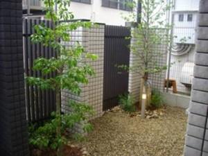 玄関脇の植栽