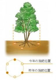 高木への施肥