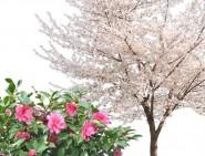 季節を楽しむ樹木