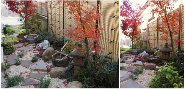 秋の庭景色2