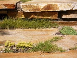 ドネガルストーンからのぞく植栽