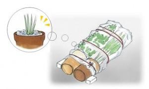 大きな鉢植えの台風対策