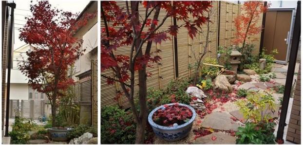 秋の庭景色1