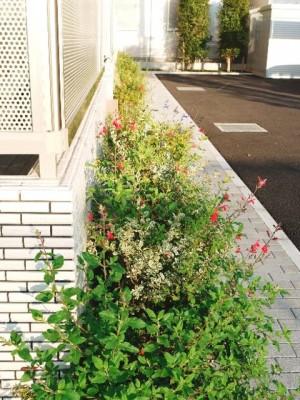 建物まわりの植栽