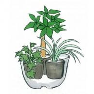 観葉寄せ植え01