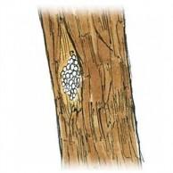 樹皮の裂け目