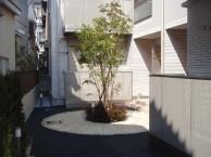 東京 外観ぴったりのシンボルツリー