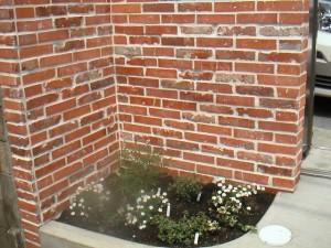 レンガと花壇