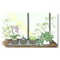 植物は日当たりの良い窓辺へ