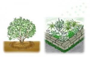 低木・花壇への施肥