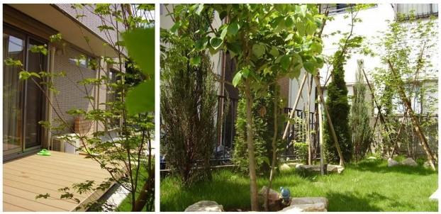 緑のキレイなお庭